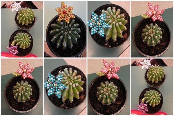 1. osztaly kaktusz