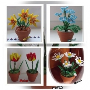 1. matus virágok