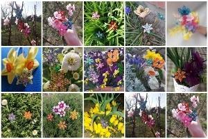 kerti gyöngyös virágok