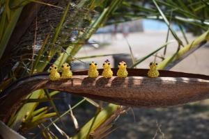 Gyöngycsibék pálmafán